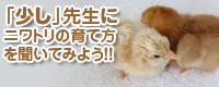 ニワトリの育て方